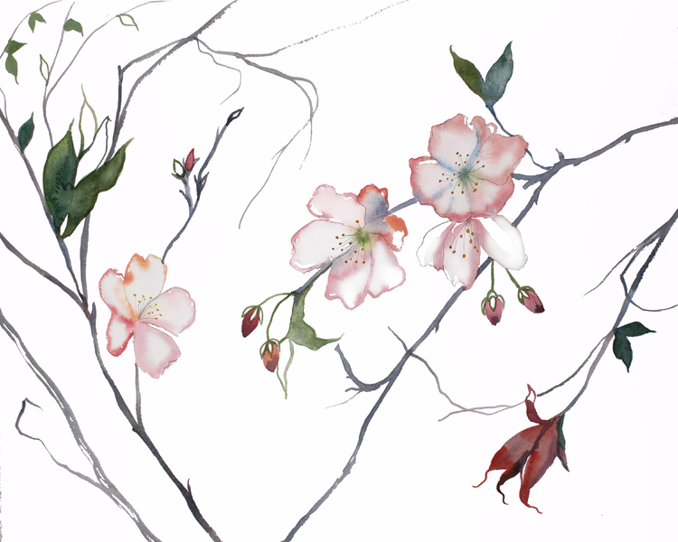 72 Large Paper Cherry Blossom Flowers