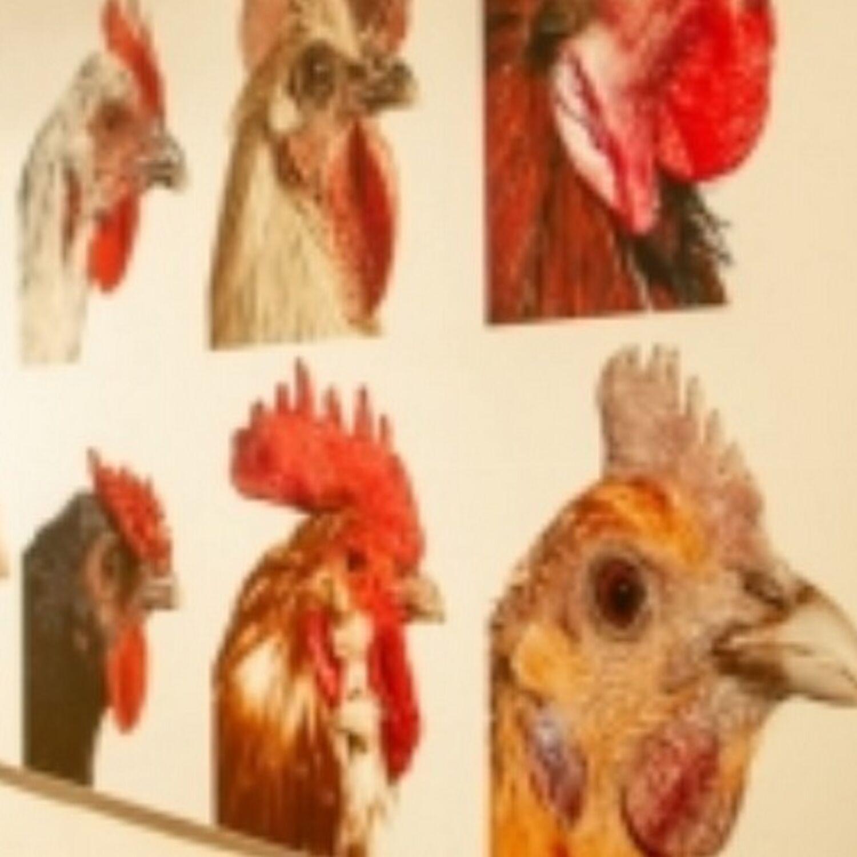 Michel Rouger nous parle de l'expo Coq