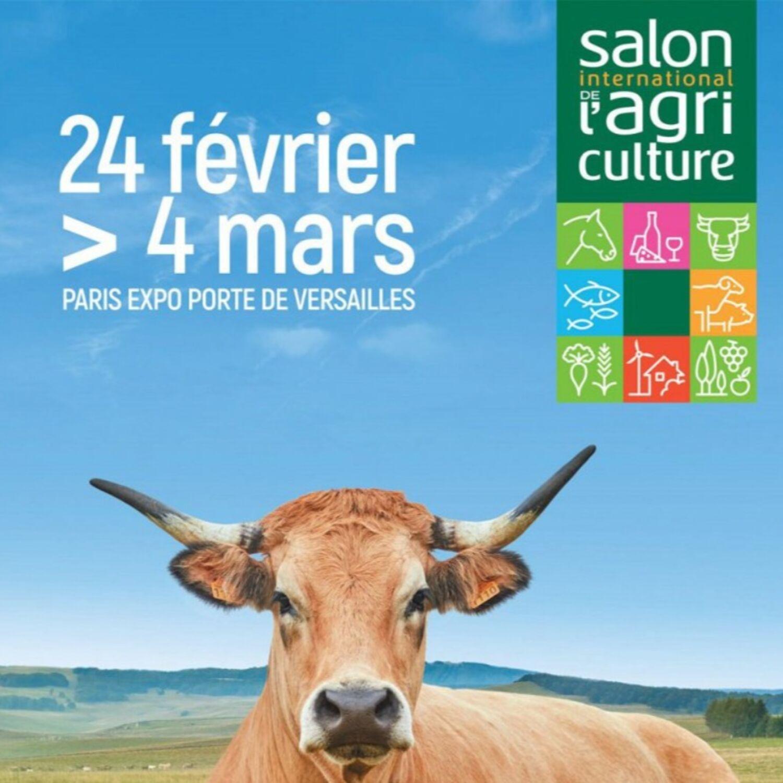 Une vache laitière côte d'orienne gagne 2 concours au salon de...
