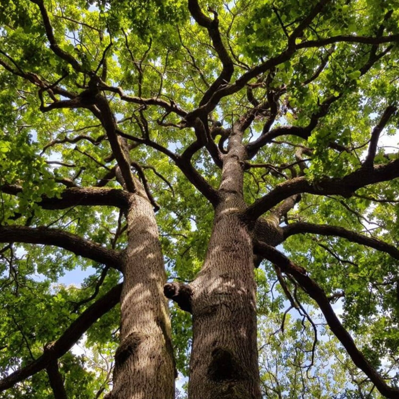 amañ : forêt et sylvothérapie