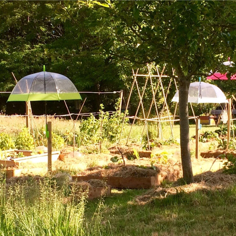 Courgettes & Cie créé une aire gourmande à Quimper