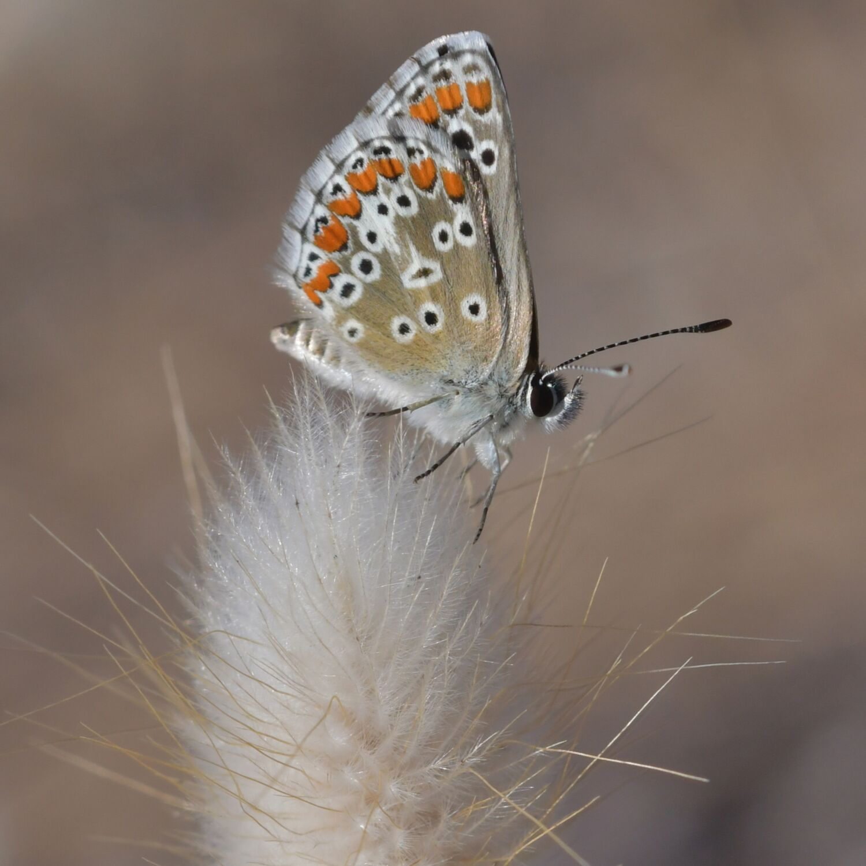 Tous aux papillons : envoyez vos plus beaux clichés en aidant les...