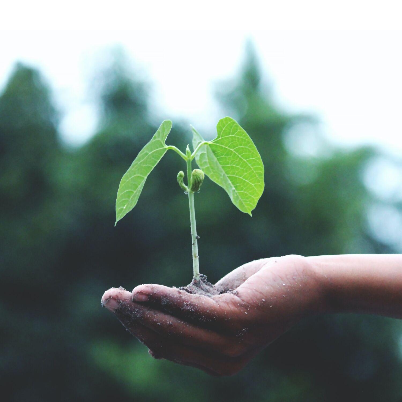 Bombe de graines - la révolution fertile