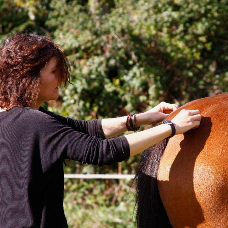 Médiation par l'animal à Pleumeur-Bodou