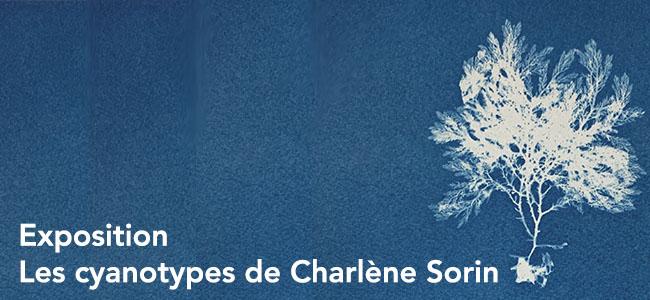 Exposition Charlène Sorin
