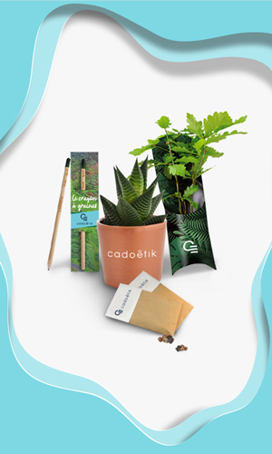 plantes catégorie