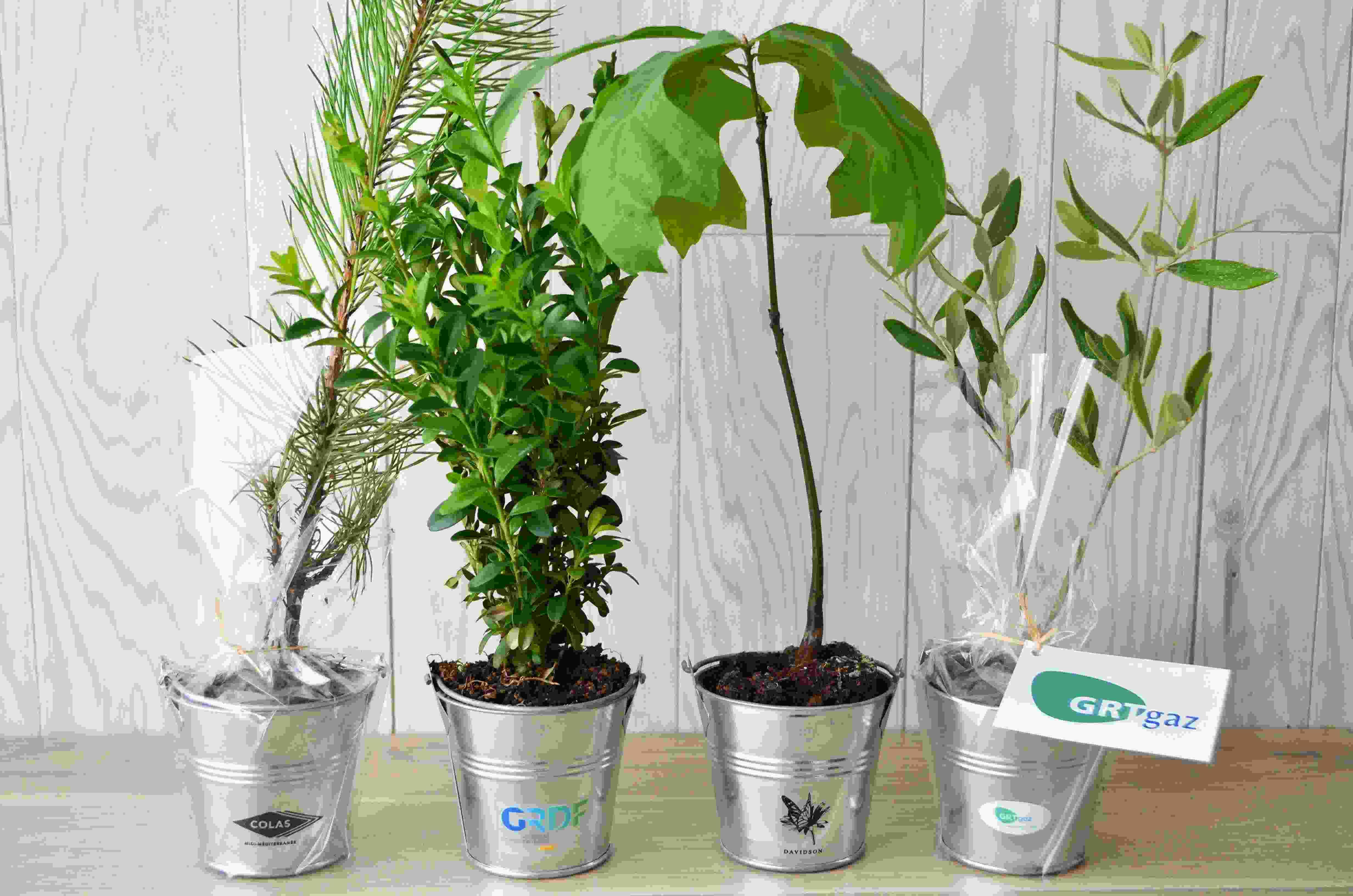 Plant arbre en pot zinc Feuillus - cadeau d'entreprise écologique