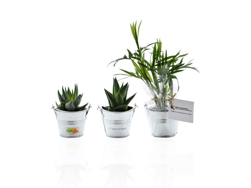 Mini plante dépolluante publicitaire - objet publicitaire végétal