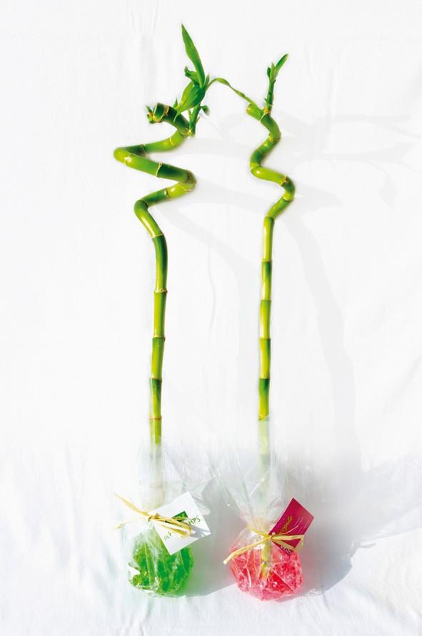 Canne chinoise torsadée 30 cm - objet publicitaire végétal