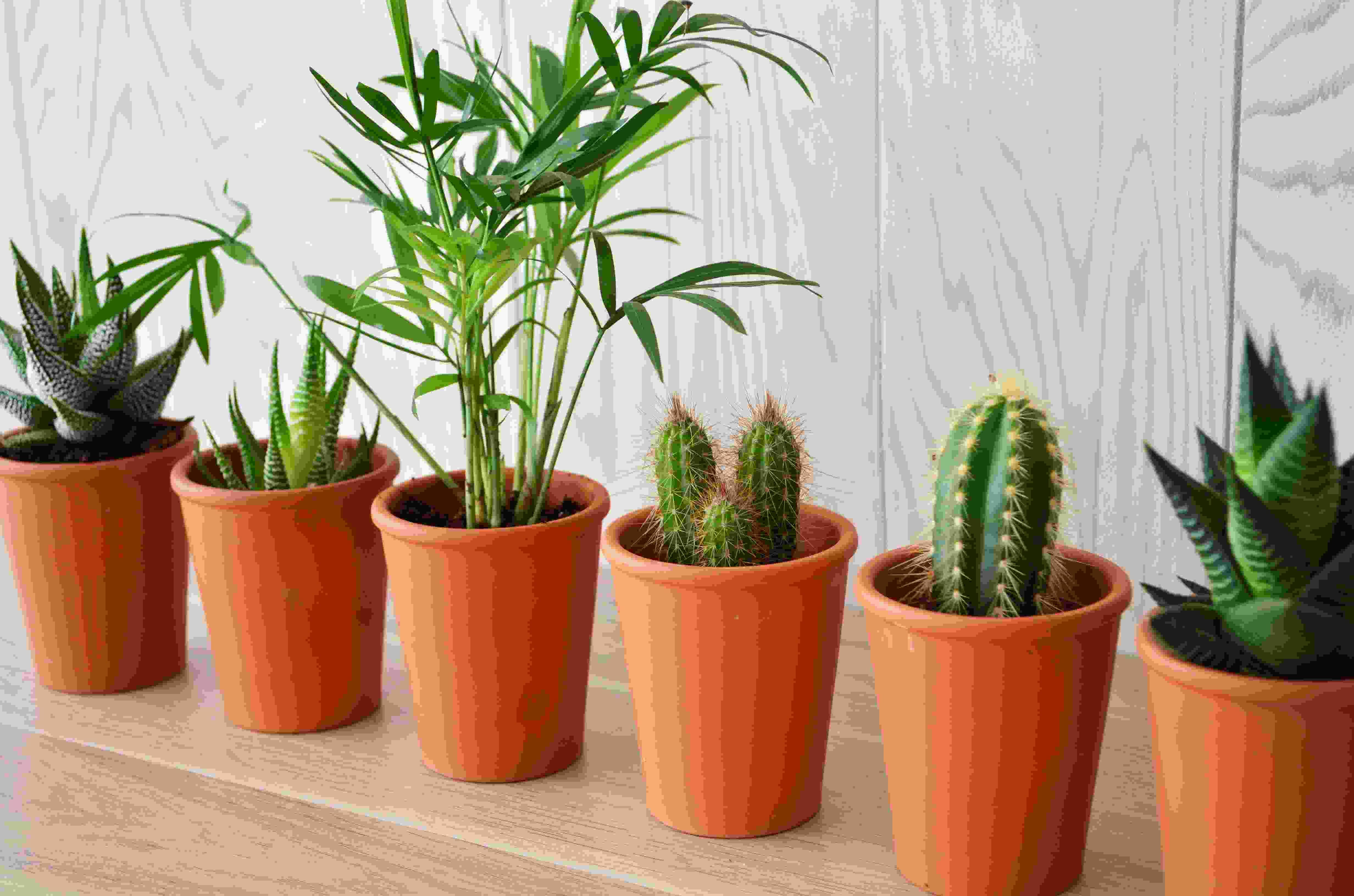 Mini plante publicitaire dépolluante - Plante personnalisée pot terre cuite
