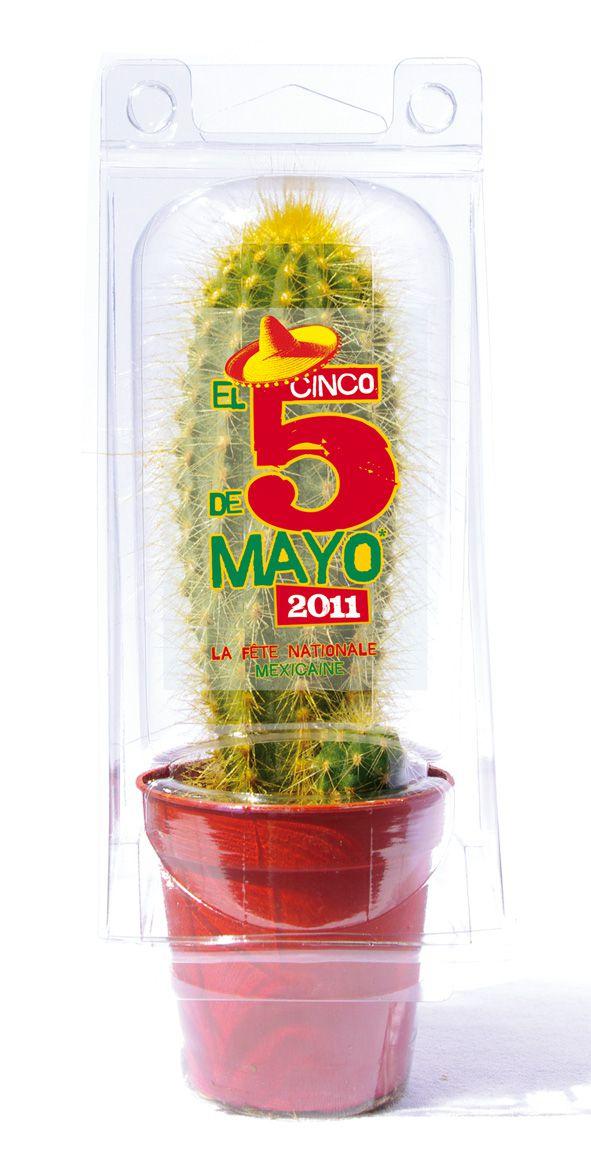 Mini serre 1 pot cactus ou succulente - plante publicitaire