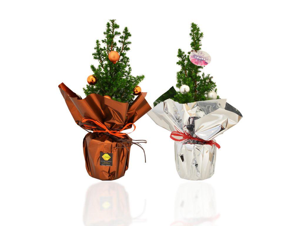 Sapin en pot de 10 cm de diamètre avec déco - plants d'arbres publicitaires