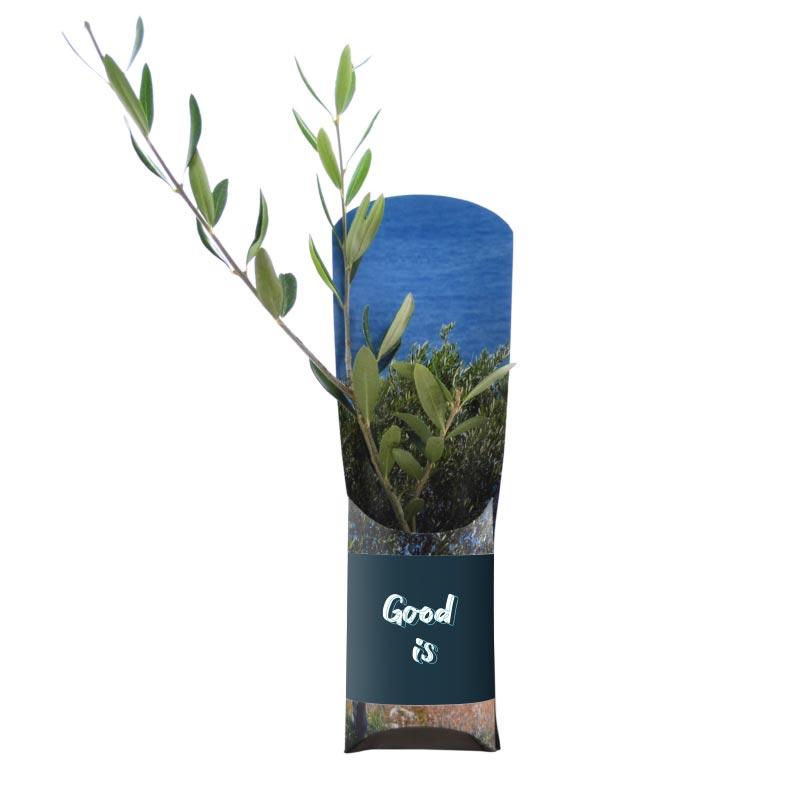 L'étui plant d'arbre publicitaire Standard - Goodies écologique