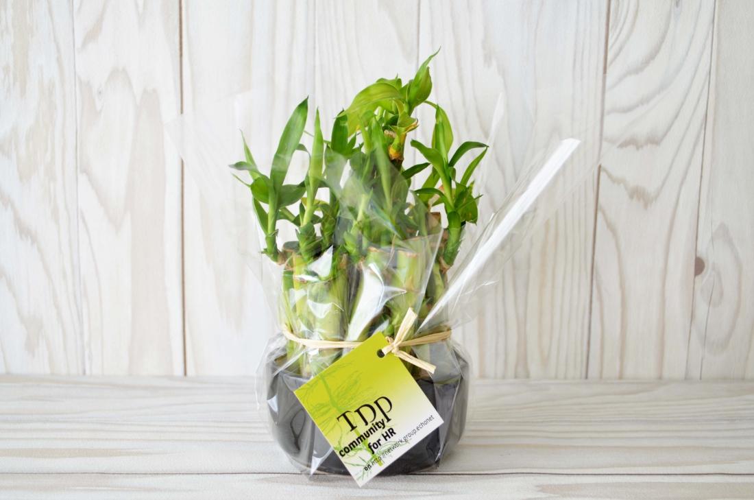 La Coupe Bambou - plante personnalisable