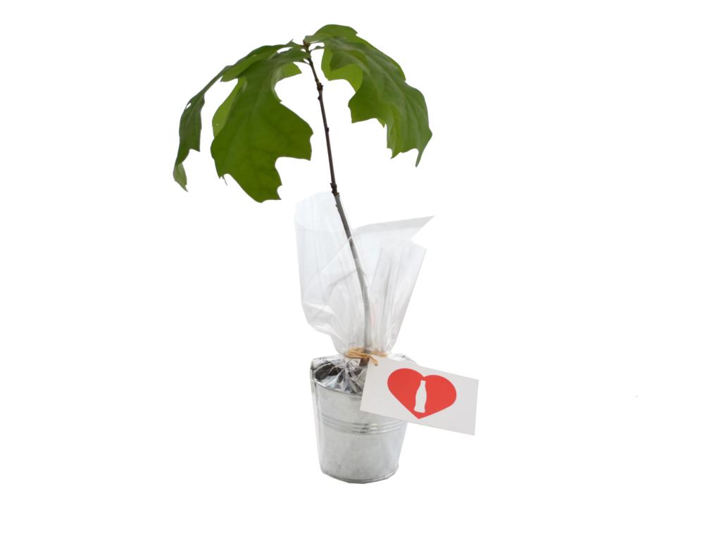 Plant arbre en pot zinc Feuillus - cadeau publicitaire végétal