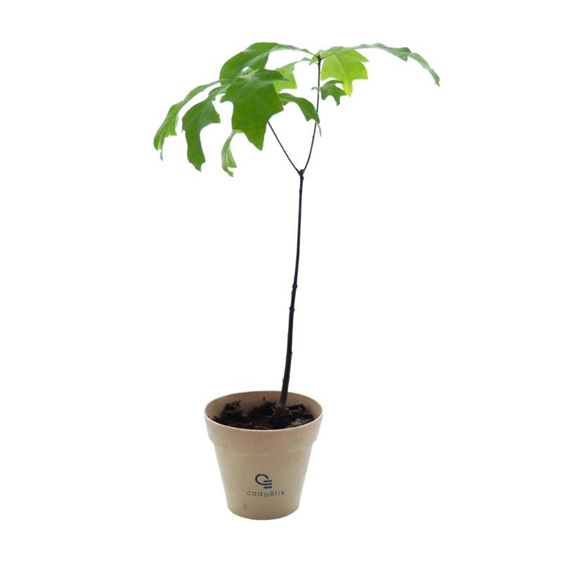 Plant d'arbre dans pot en fibre de bambou personnalisable