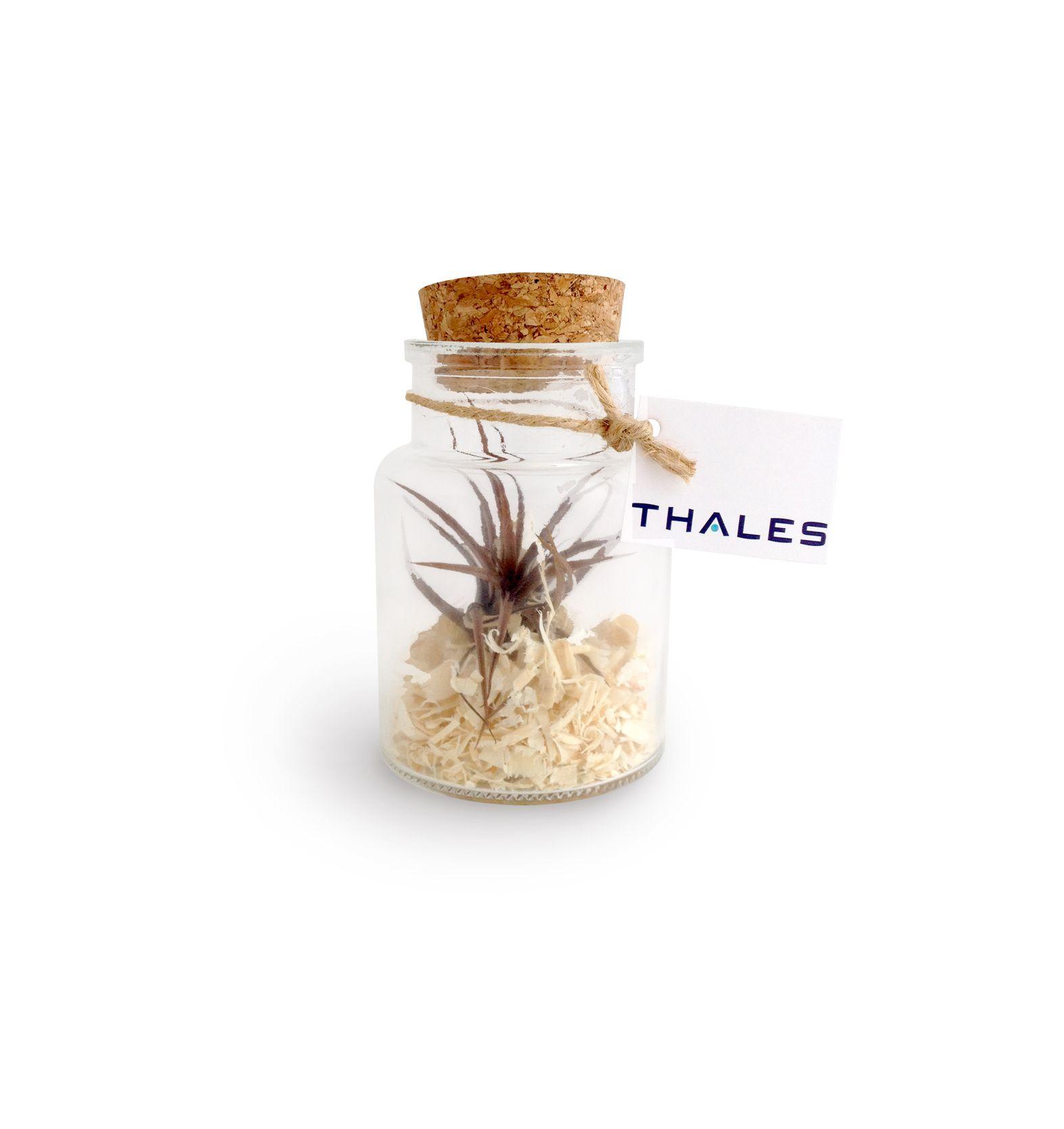 Mini Terrarium publicitaire Tillandsia en bouteille