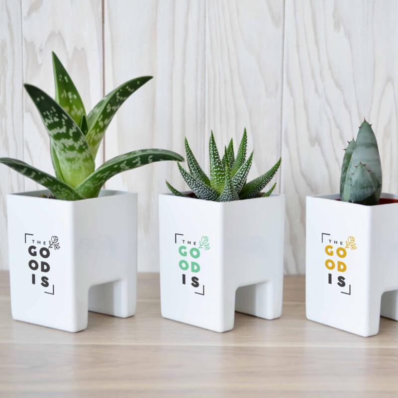 Goodies écologique - Le Pot Ordi végétal
