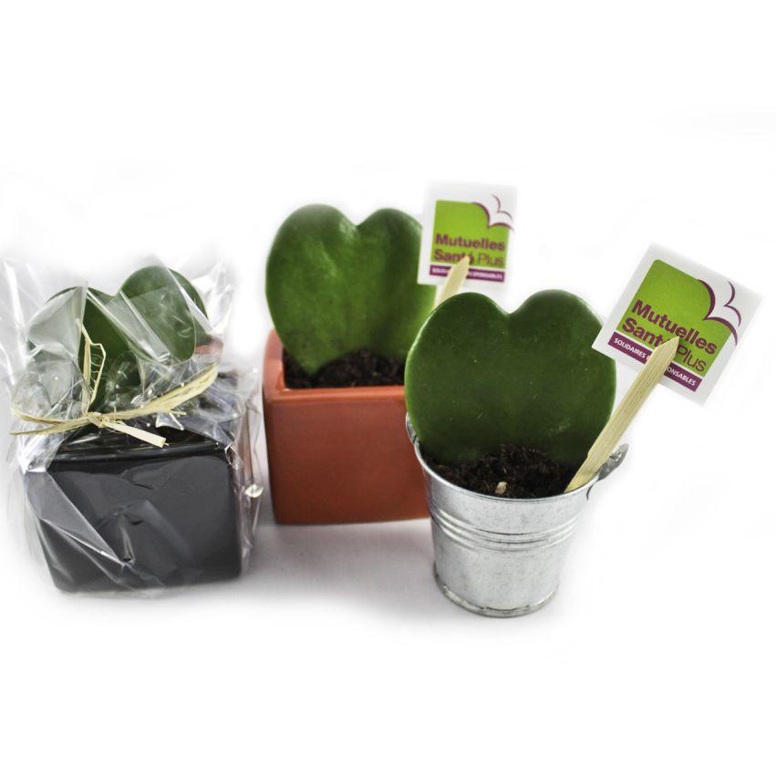 Plante publicitaire en forme de coeur Hoya - Pot zinc 6,5-7 cm