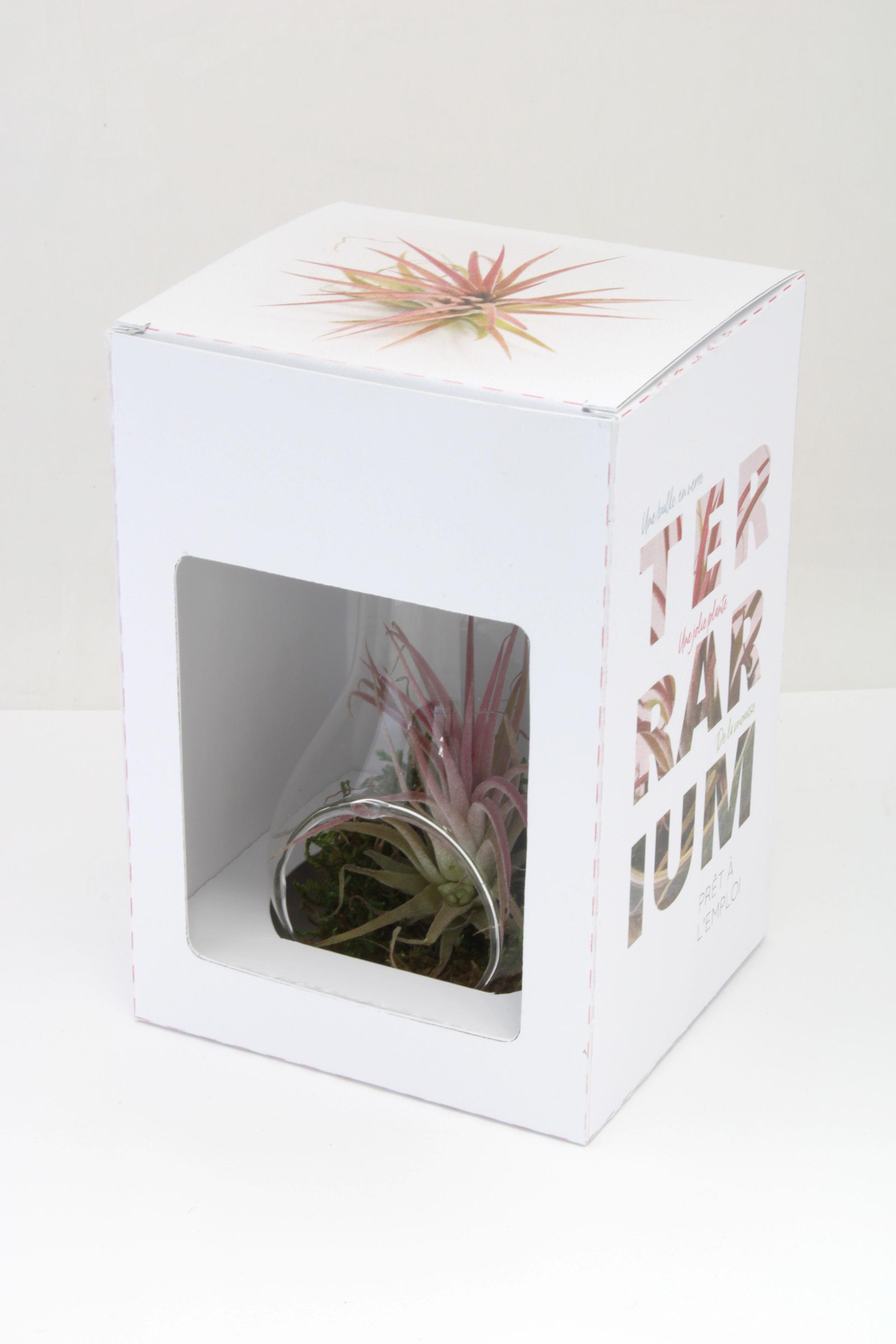 Tillandsia personnalisé dans vase déco en verre forme ampoule