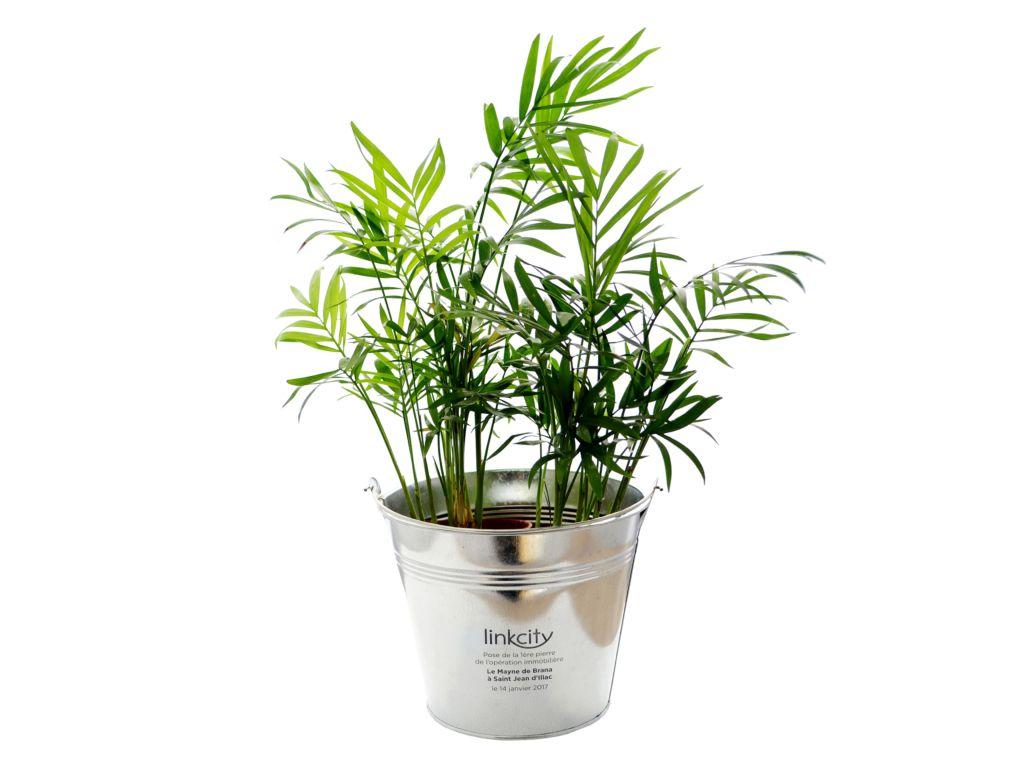 Grande plante déco - cadeau d'entreprise végétal