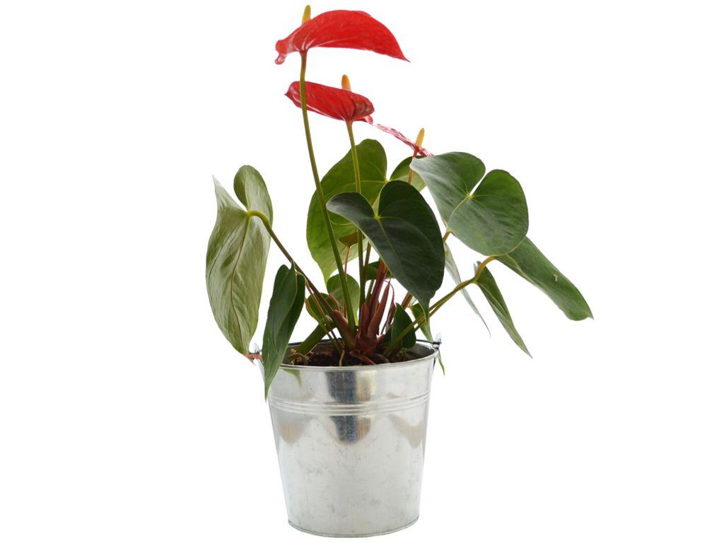 Grande plante publicitaire déco - plante personnalisée