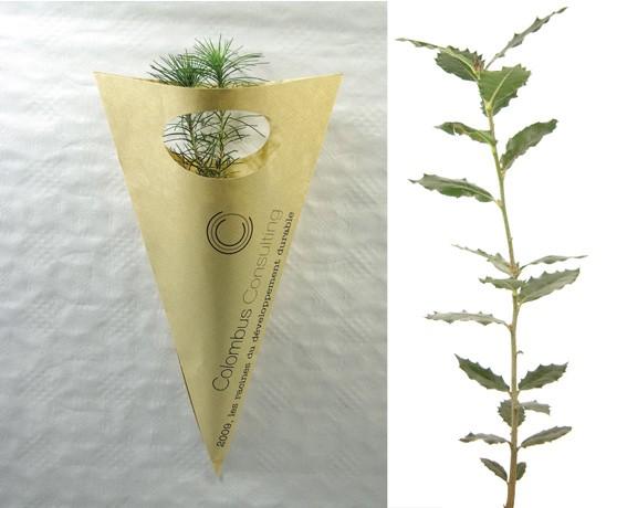 Cornet Kraft pour Plants de Feuillus - cadeau d'entreprise végétal