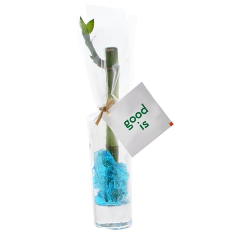 Bambou d'eau en vase individuel - cadeau d'entreprise végétal