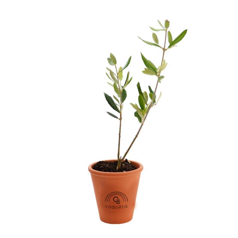 Plant arbre en pot terre cuite - Prestige : Olivier, Sequoia, Palmier …