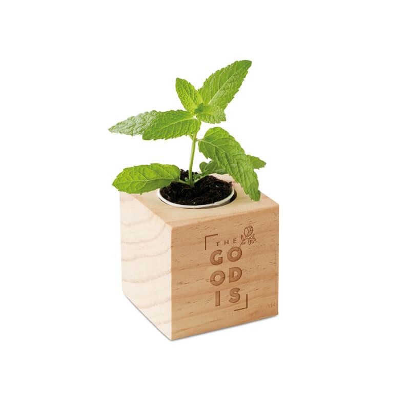 Graines publicitaires - Pot en bois avec graine  Minthy