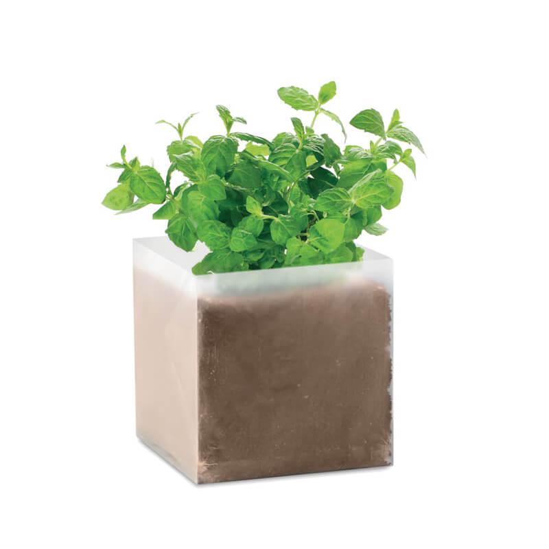 Goodies entreprise - Substrat avec graines Menthe MINT