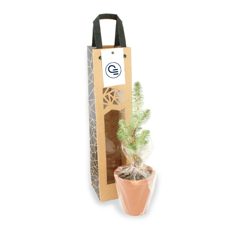 Plant d'arbre Résineux en sac kraft Black Collection
