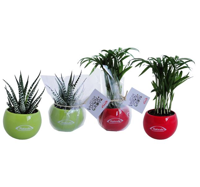plante publicitaire - Plante dépolluante publicitaire en pot aimanté céramique