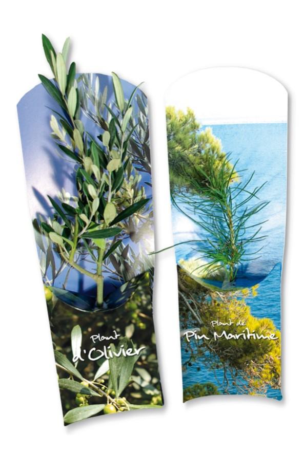 Plant d'arbre publicitaire - Plant de Résineux en étui - Cadeau PUBLICITAIRE végétal