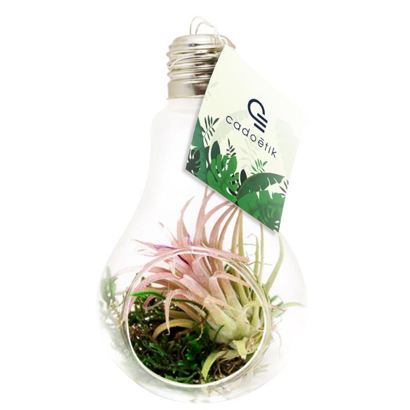Plante publicitaire dans vase ampoule Tillandsia