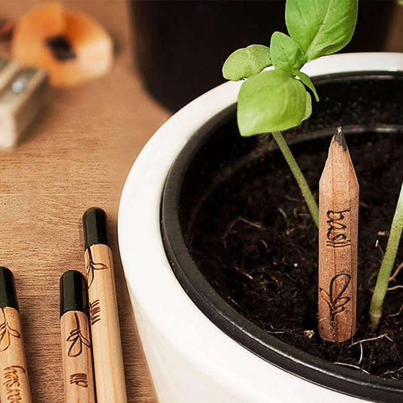 Le crayon à planter Sprout