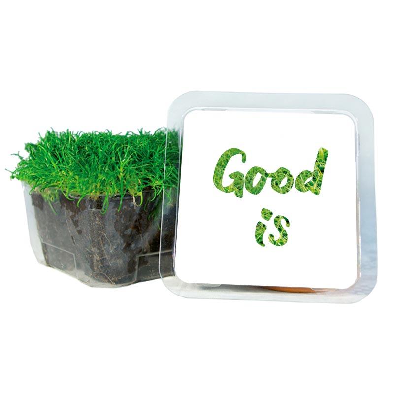 Petit Cube Vert - kit de plantation personnalisé