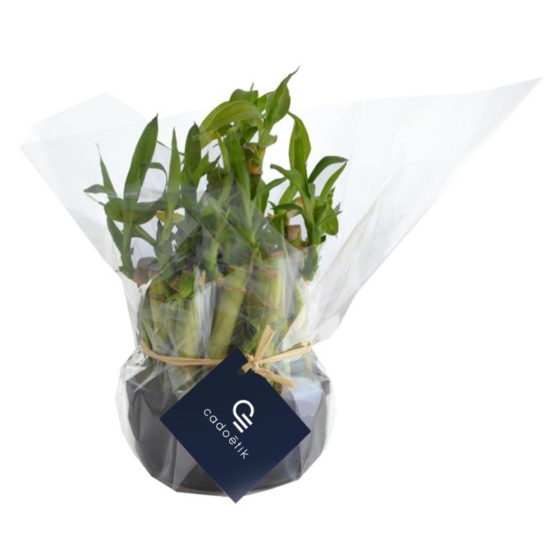 Plante publicitaire - Coupe Bambou - Cadeau d'entreprise végétal