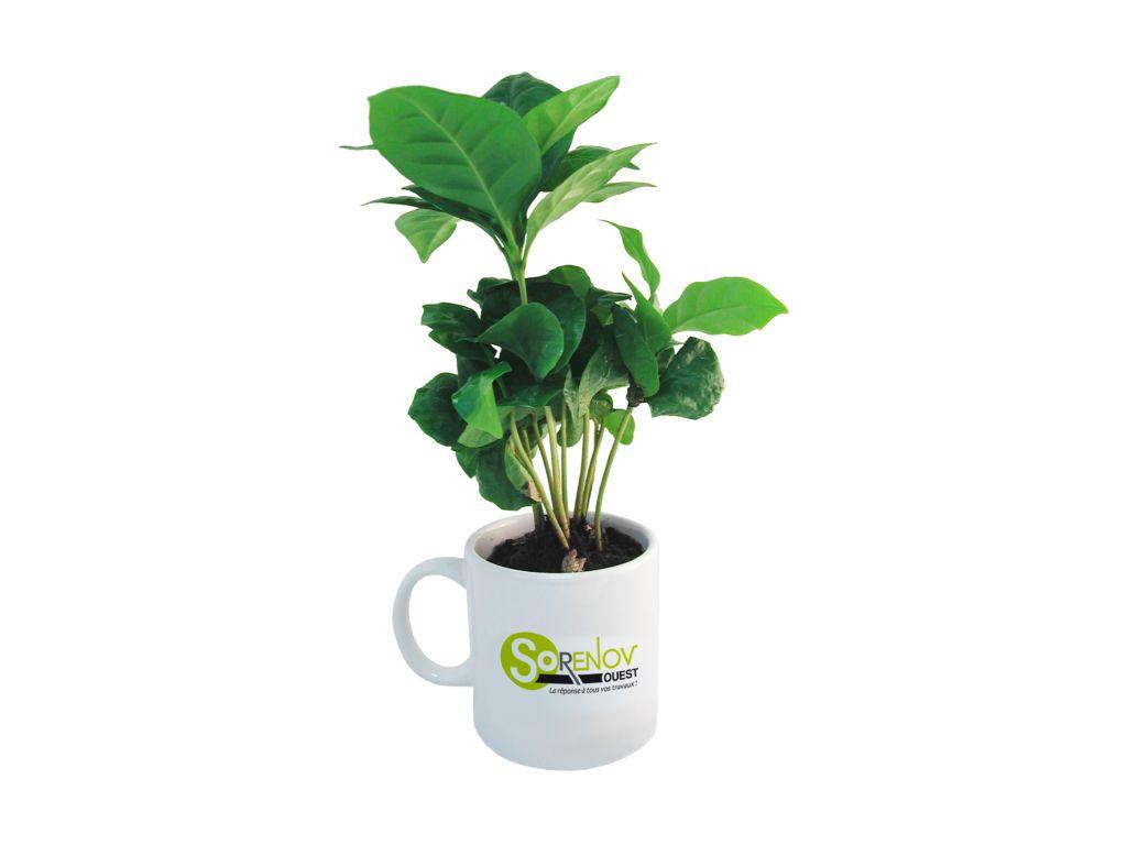 Caféier en mug personnalisable - cadeau d'entreprise végétal