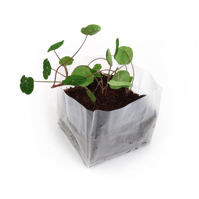 Kit de plantation publicitaire Pocket Coco - graines à semer