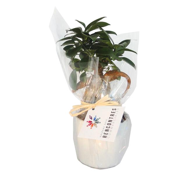 Ficus Ginseng en pot ceramique 7 cm - plante personnalisée