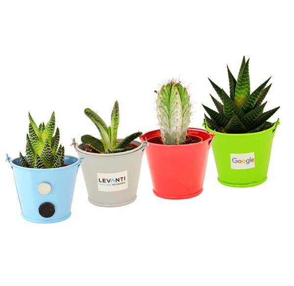 Cadeau publicitaire végétal - Plante publicitaire pot zinc aimanté Lara