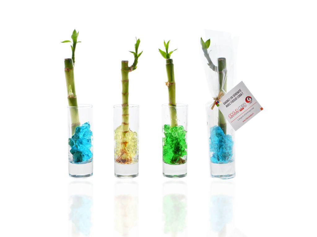 Bambou d'eau en vase individuel - plante publicitaire