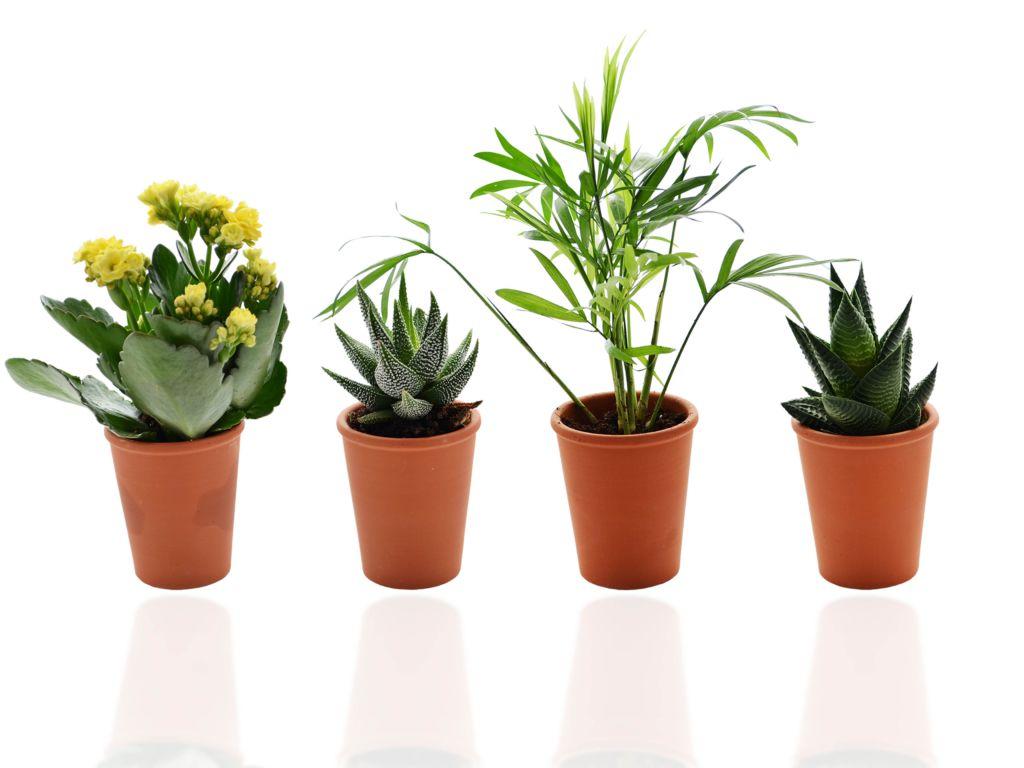 Mini plante publicitaire dépolluante - Plante publicitaire dans un pot terre cuite