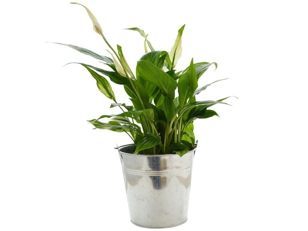 Grande plante déco - plante publicitaire
