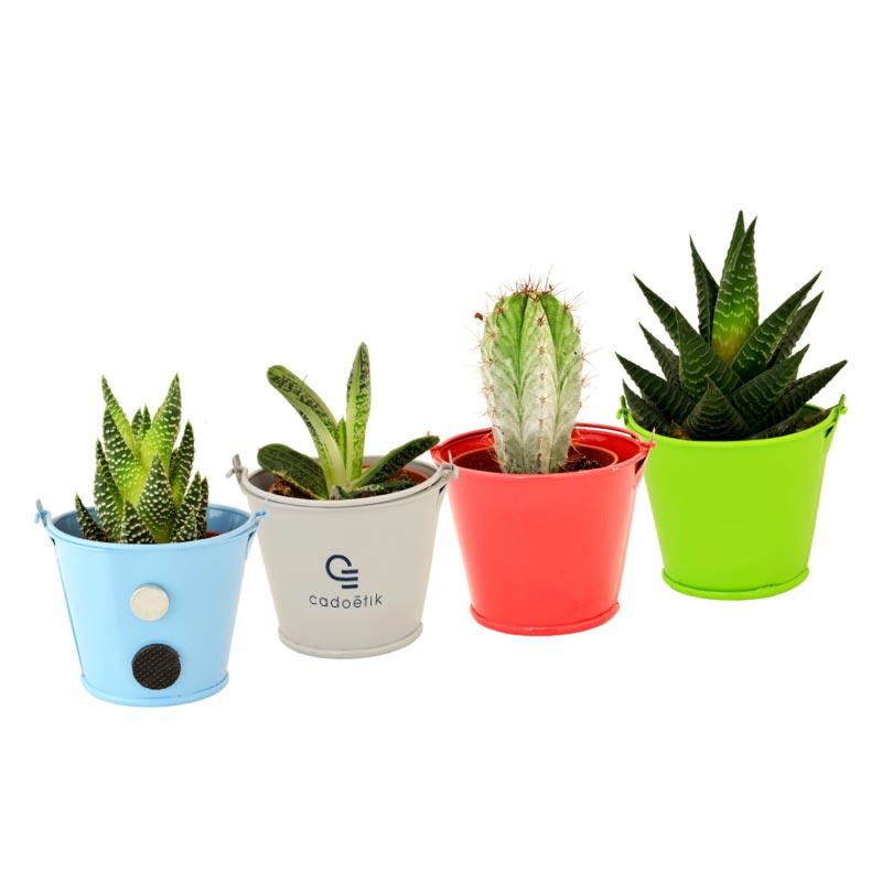 Mini plantes publicitaires dans pot en zinc coloré et aimanté