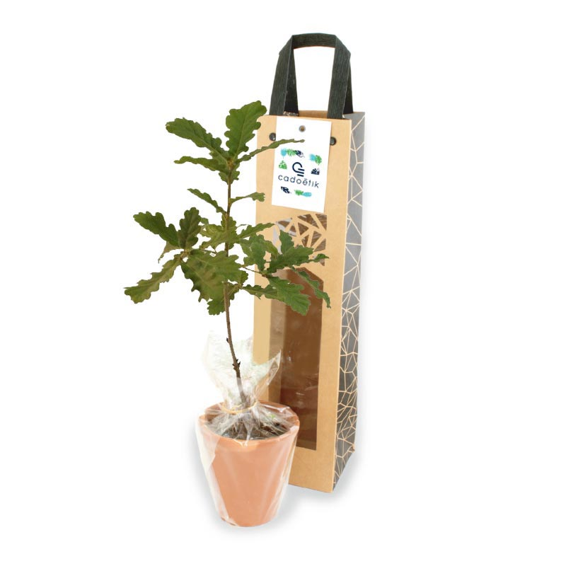 Plant d'arbre Feuillus en sac kraft black collection