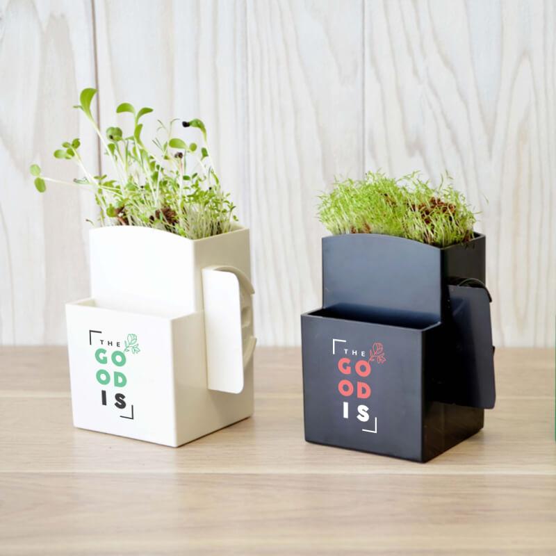 La végétal-Box avec plante dépolluante - Goodies entreprise