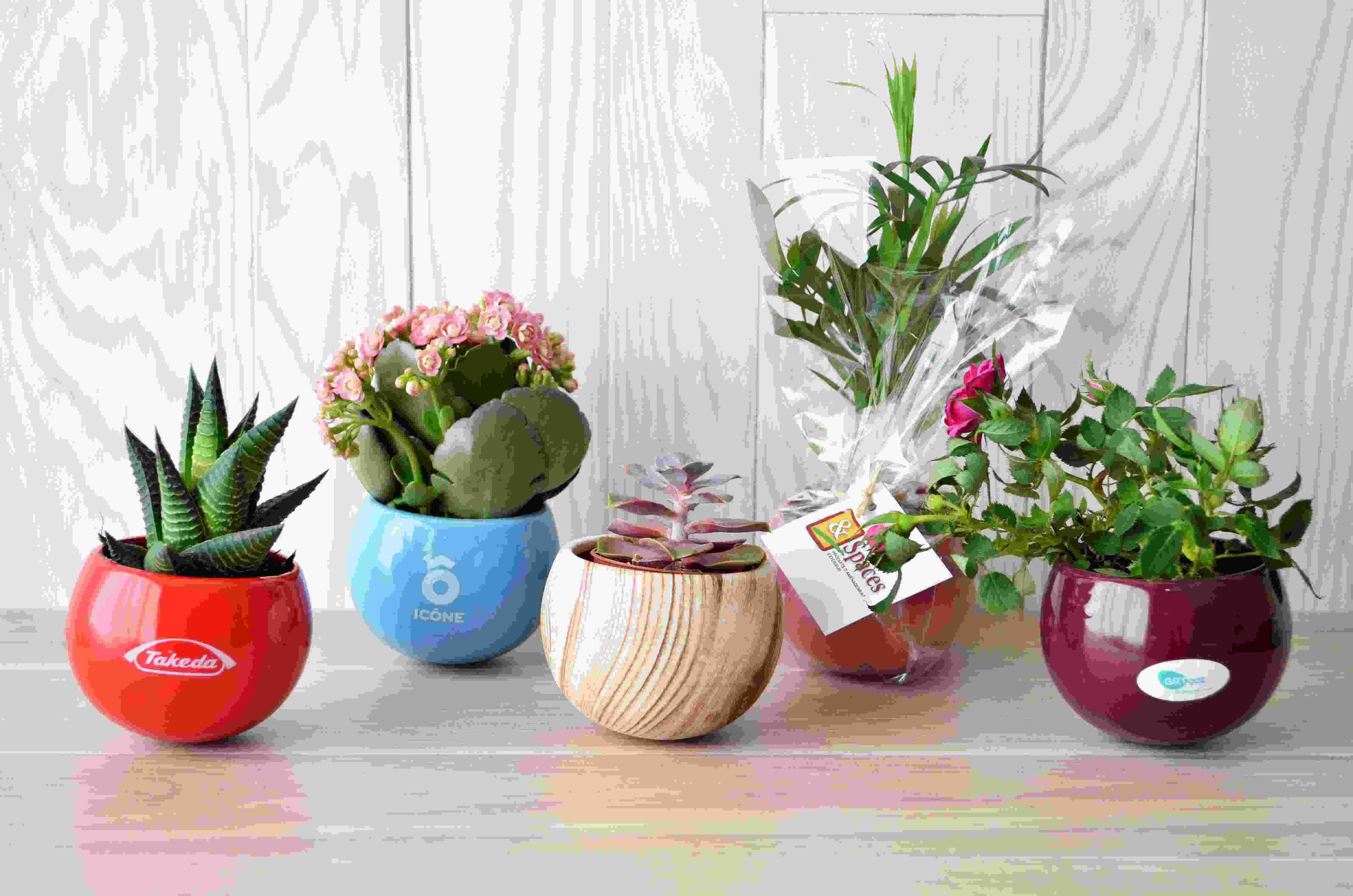 Plante dépolluante en pot aimanté céramique - plante personnalisée