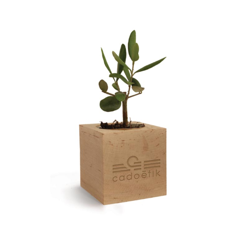 Cube en bois arbre